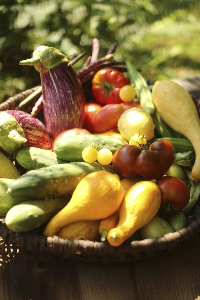 Vegetable Growing Season