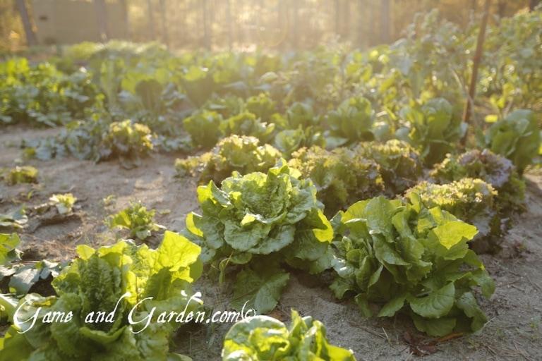 Fall Planting Dates