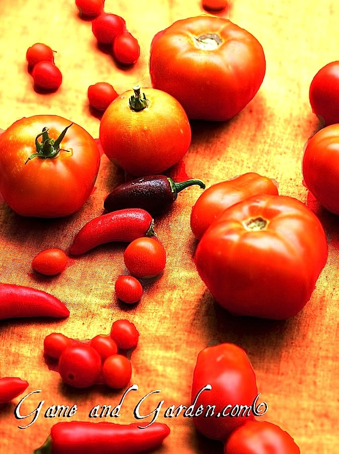 Fresh tomatoes are the best. My favorite meal in the summer is a BLT with fresh tomatoes!