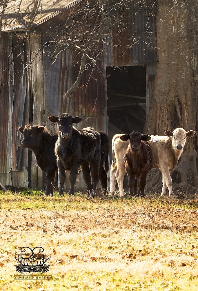 I just love cows. I could watch them all day. I love seeing them in the green pastures eating the healthy grass!