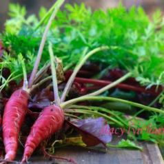 Growing Carrots 101