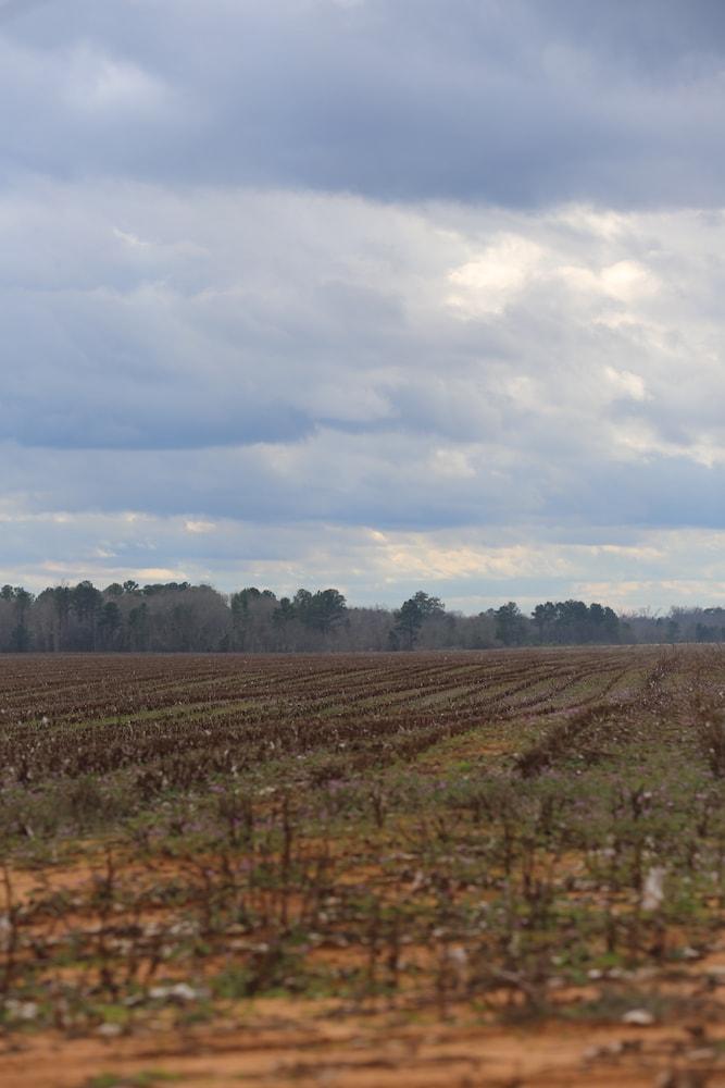 Southern Landscape