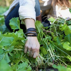 How to Thin & Harvest Greens for Easier Cleaning