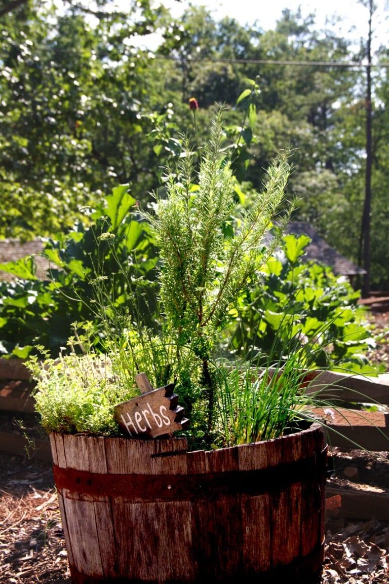 Saving Herb Seeds: Easy Steps for Saving Seeds