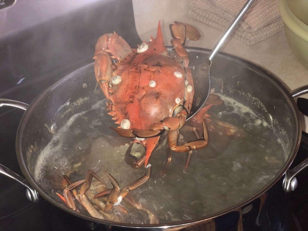 Boiling fresh caught crab