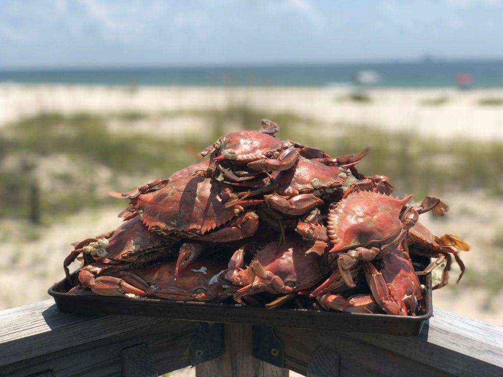 Crabs against a beach background