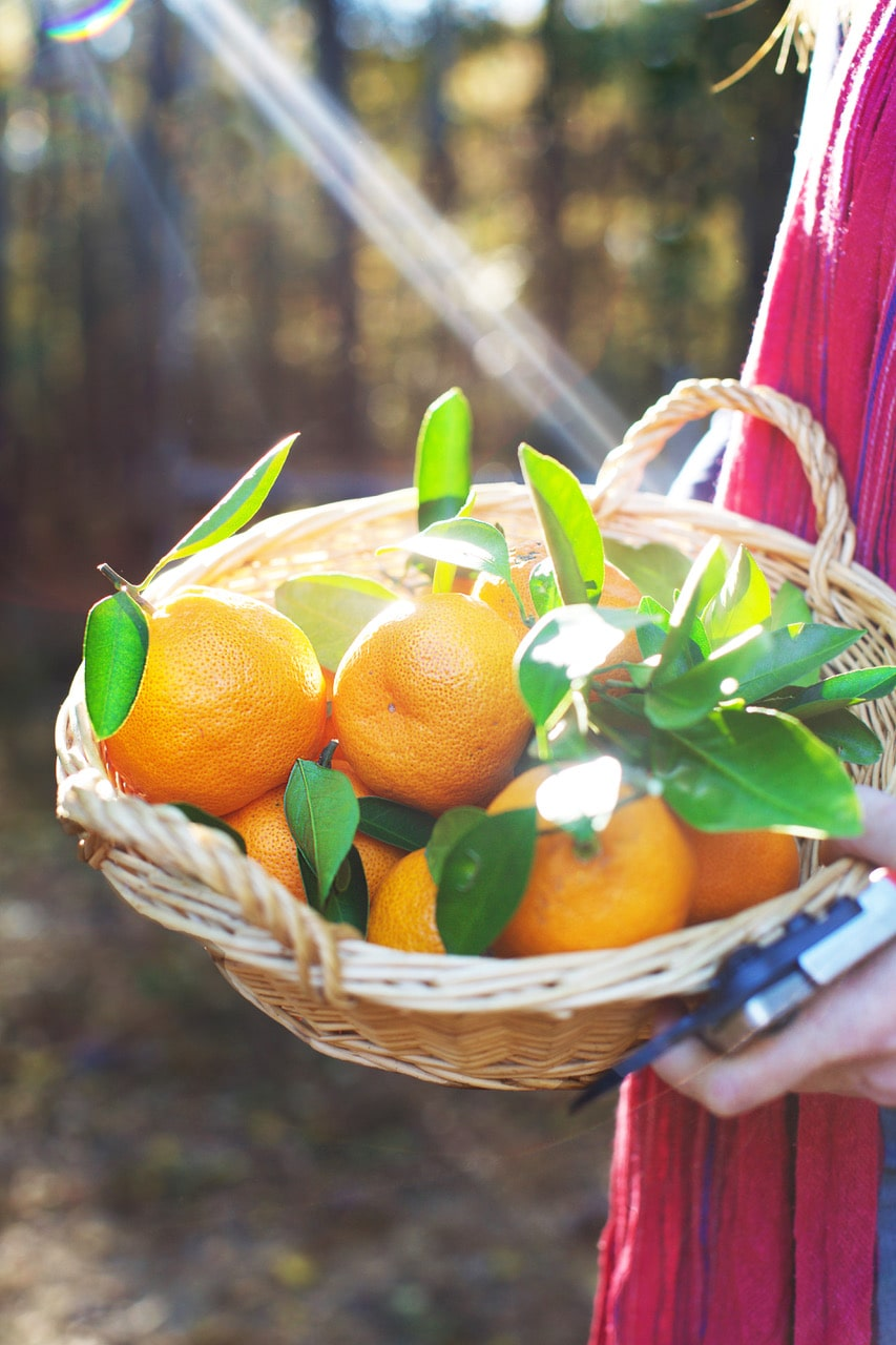 Oranges in a basket with the sun rays coming through the trees