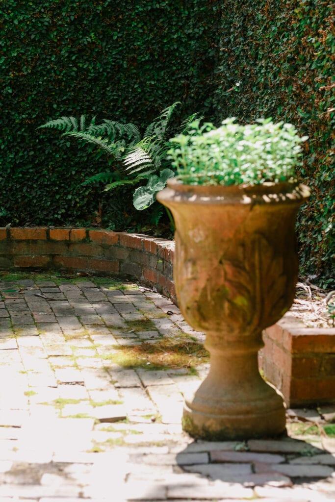 Ferns growing in outside planter in courtyard