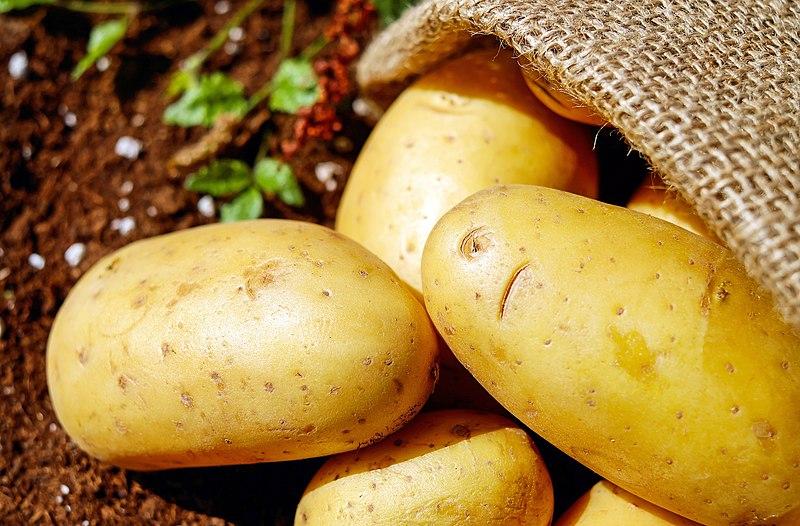 fresh potatoes spilling from burlap sack