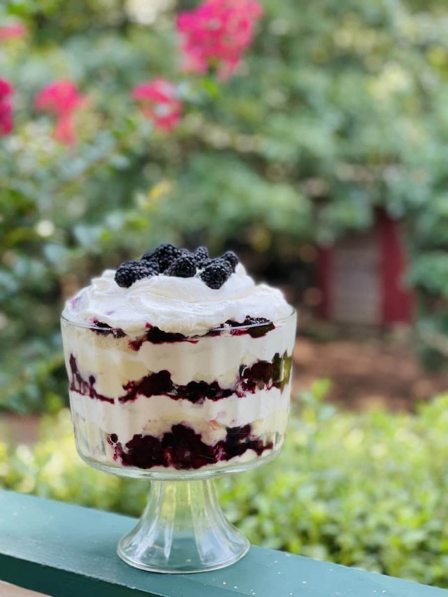 Blackberry Trifle in front of red chicken coop with Camilia Plants Blooming